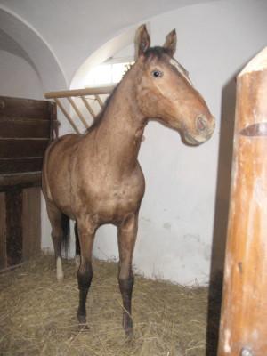 Na zámku je kůň